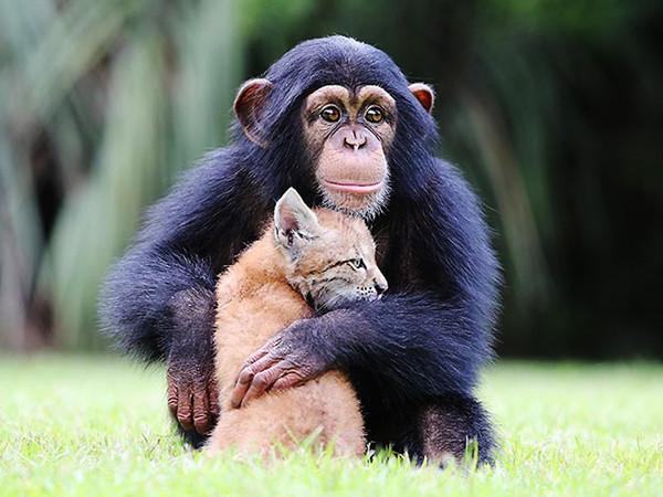 动物的世界之最