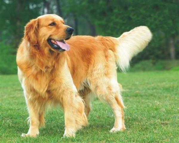 最机智的十种狗狗