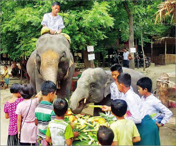 每年8月12日是世界大象日