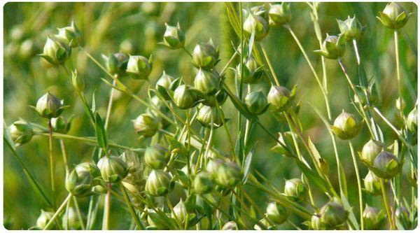 壁纸 成片种植 风景 植物 种植基地 桌面 600_333
