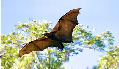 还我蝙蝠清白《万圣节 蝙蝠发表通告》(草蝶)