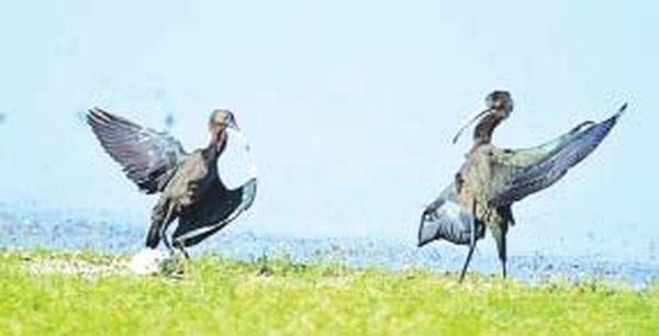 又是候鸟入境之时有必要加强对其等的保护工作